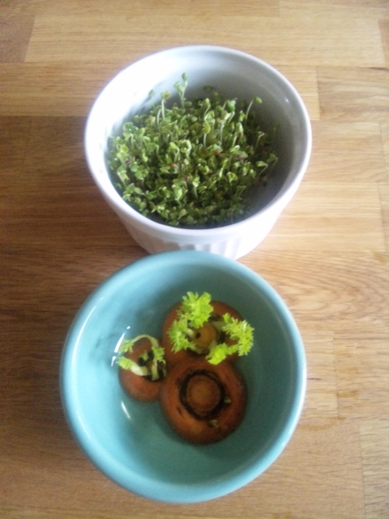 キッチン菜園。