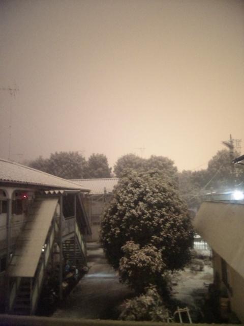 雪だよ〜。